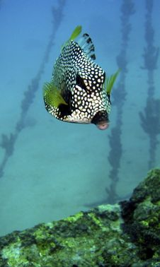 Free Trunk Fish Stock Images - 6458004