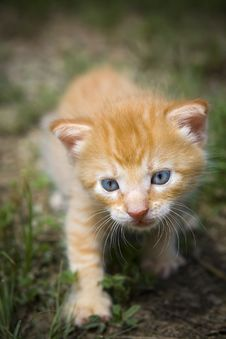 Free Kitten Hunting Outside Royalty Free Stock Image - 6459286