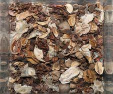 Free Potpourri 2 Royalty Free Stock Image - 6459546
