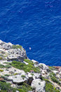 Free Seagull In Aegean Stock Photography - 6464032