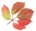 Free Grape Leaf Stock Image - 6467301