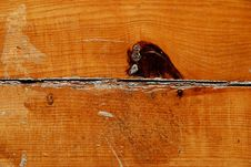 Wood Material Royalty Free Stock Images