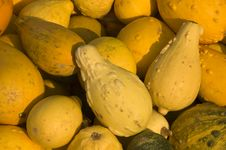 Free Gourds Stock Images - 6460334