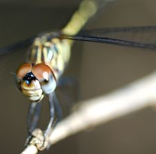 Free Macro Dragonfly Stock Photo - 6460450