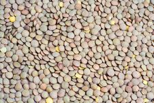 Free Handful Of Uncooked Lentils Stock Images - 6460624
