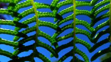 Free Fern Leaves Stock Image - 6460671