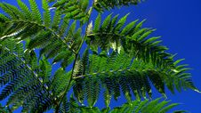 Free Fern Leaves Royalty Free Stock Image - 6460676