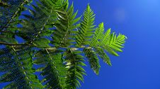 Free Fern Leaves Royalty Free Stock Photography - 6460677