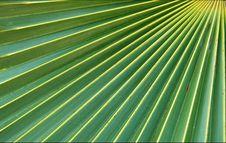 Free Palm Tree Leaf Royalty Free Stock Photos - 6461088