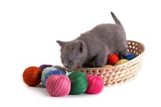 Free Kitten Plays On A White Background Stock Image - 6462131