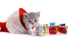Free Kitten Plays On A White Background Stock Image - 6462141