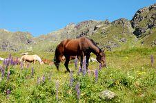 Free Horses Stock Image - 6462601