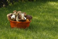 Free Mushrooms Stock Image - 6462611