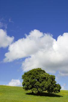 Free Solitary Tree Stock Photo - 6462910
