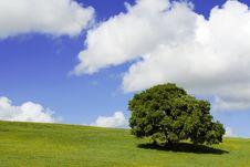 Free Solitary Tree Royalty Free Stock Photo - 6462995