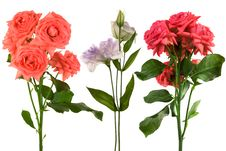 Free Beautiful Fresh Flowers Stock Photography - 6463042
