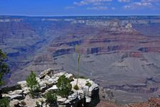 Free South Rim At Grand Canyon Royalty Free Stock Images - 6464219