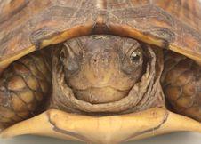 Turtle Closeup Stock Image