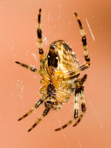 Free Spider Stock Photos - 6467843