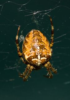 Free Spider Royalty Free Stock Photo - 6468015