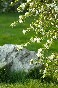 Free Old Stone And Young Flowers On Green Field Royalty Free Stock Photo - 6468225