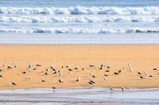 Free Seagulls On The Beach No.1 Royalty Free Stock Photography - 6468377