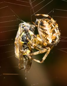 Free The Spider And The Wasp Royalty Free Stock Photography - 6468517