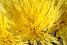 Free Yellow Flower Stock Images - 6468594