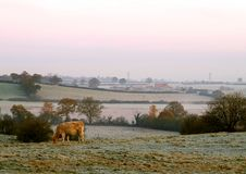 Early Frosty Morning Royalty Free Stock Photography