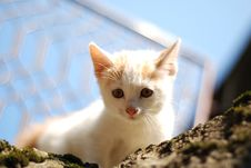 Free Curious Lil  Cat Royalty Free Stock Photos - 6469348