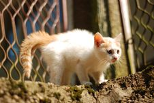 Free Dangerous Cat Royalty Free Stock Image - 6469456