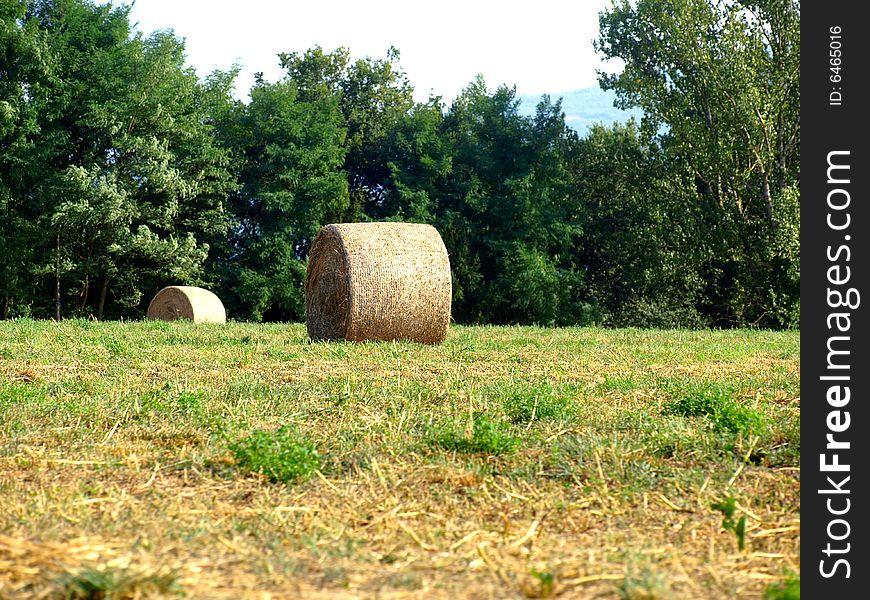 Hay s rolls