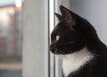 Free Black Cat Looking Out The Window Stock Images - 64624254