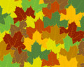 Free Maple Background Royalty Free Stock Images - 6476509