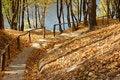 Free Autumn Park Royalty Free Stock Photo - 6478185
