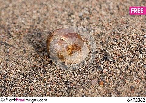 Free Snail Stock Photography - 6472862