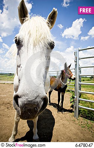 Free Horse And Colt Royalty Free Stock Photography - 6478047
