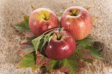 Fresh Apples On Maple Leaves Royalty Free Stock Images