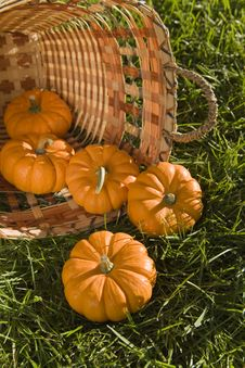 Free Mini Pumpkins In Basket Royalty Free Stock Images - 6470179