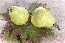 Free Fresh Pears On Maple Leaves Stock Photo - 6470180