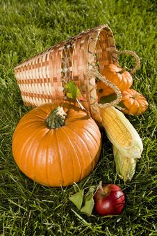 Free Harvest Basket Royalty Free Stock Photos - 6470188