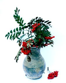 Free Ash-berry In Vase Stock Photography - 6470412