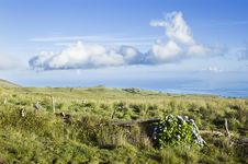 Free Pasture Landscape Of Pico Island, Azores Royalty Free Stock Photos - 6470898