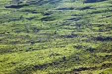 Free Cows Grazing In Pico Island, Azores Royalty Free Stock Photography - 6470907