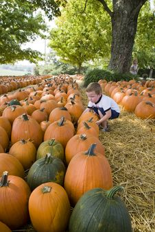 Young Boy In  Pumpkin Patch Royalty Free Stock Images