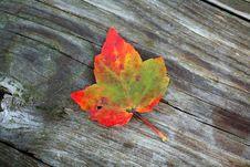 Free Autumn Leaf Royalty Free Stock Photo - 6471505