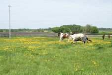 Free Running In The Pasture Royalty Free Stock Image - 6472256