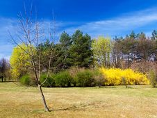 Free Park In Spring Royalty Free Stock Photos - 6472708