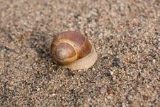 Free Snail Stock Photography - 6472862