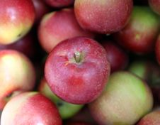Free Pretty Red And Green Apples Freshly Picked Royalty Free Stock Photos - 6474898
